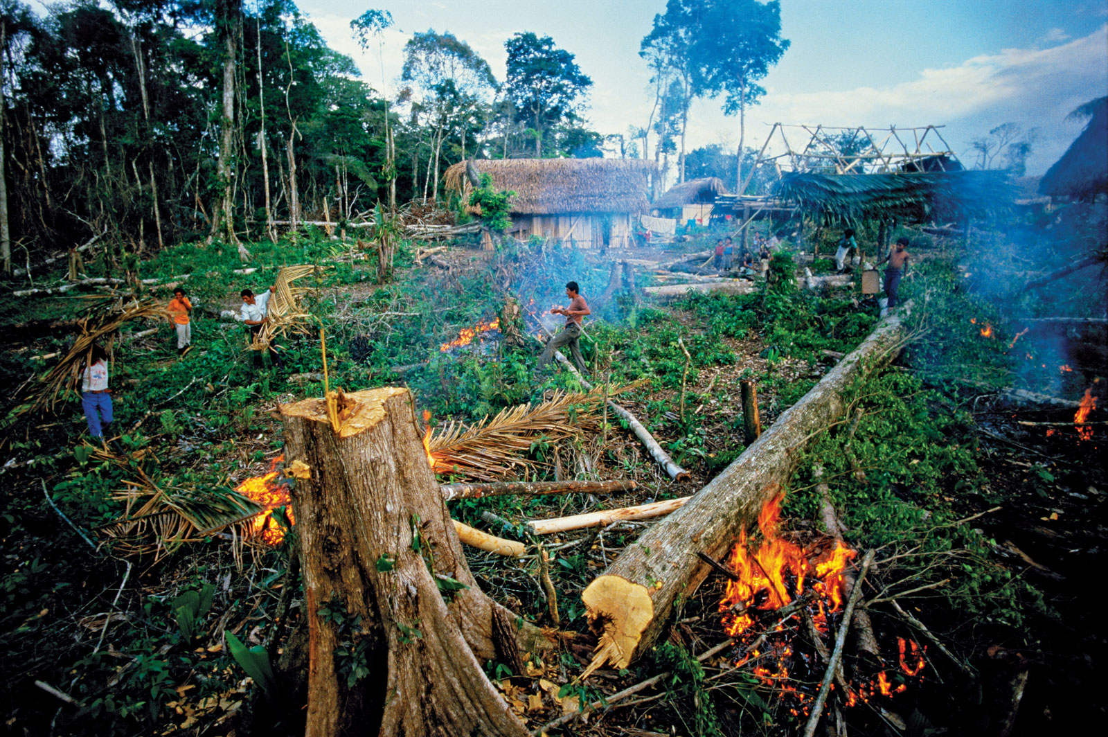 the importance of the tropical rainforests and results of forest destruction But what is deforestation the loss or destruction of those not yet discovered—live in tropical rainforests deforestation in those regions.