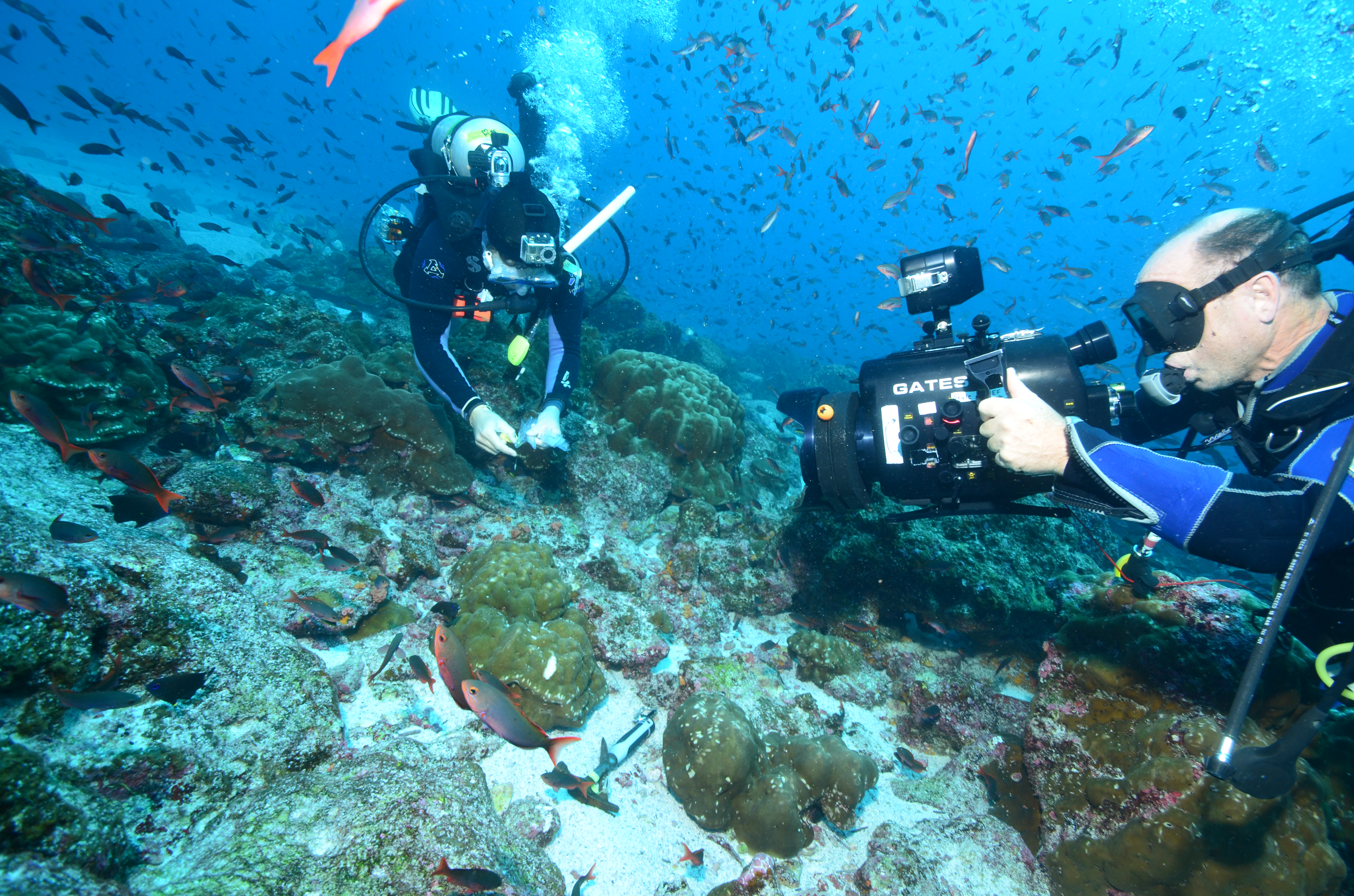 how to get work experience in marine biology