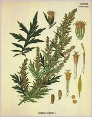 medicine during the elizabethan era