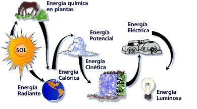 Resultado de imagen de la energía del Sol se transforma en en energía química