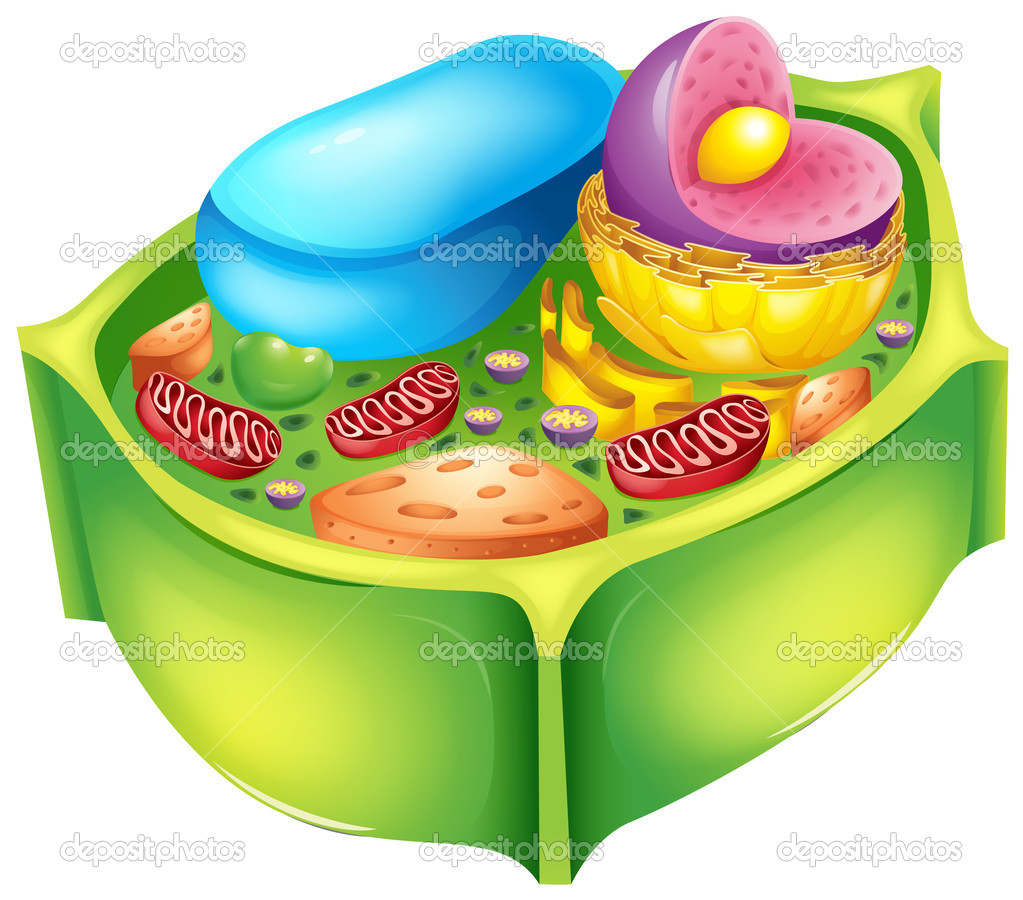 3d Cell Diagram Wiring Diagrams Photos Plant From Textbook Animal Celula Y Vegetal Sin Nombres Www Pixshark Com Labeled