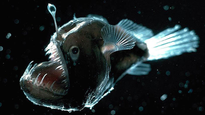 Deep sea creatures we think to overcome these things they have to adapt to their surrounding and change their daily routines to adjust with their habitat sciox Choice Image
