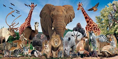 wild animals mind map