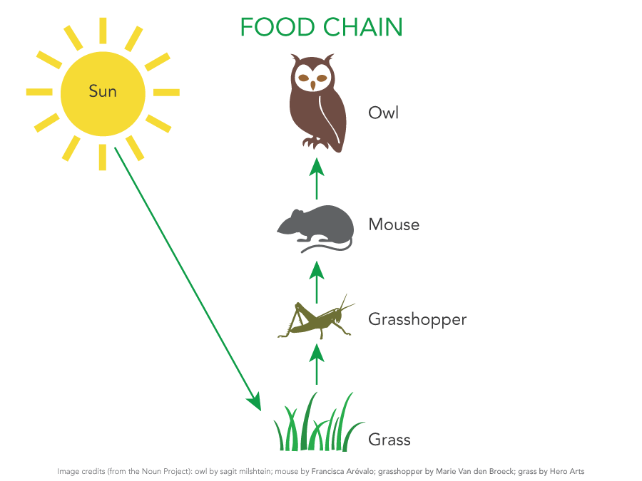 Ecosystem Food Chain Examples