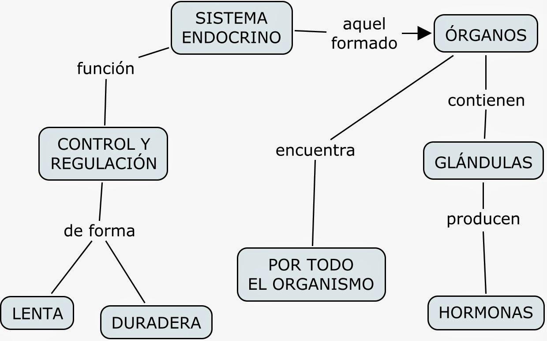 Moderno Diagrama Del Sistema Endocrino Para Etiquetar Elaboración ...