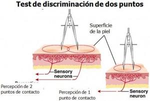 Resultado de imagen para discriminacion entre dos puntos fisiologia