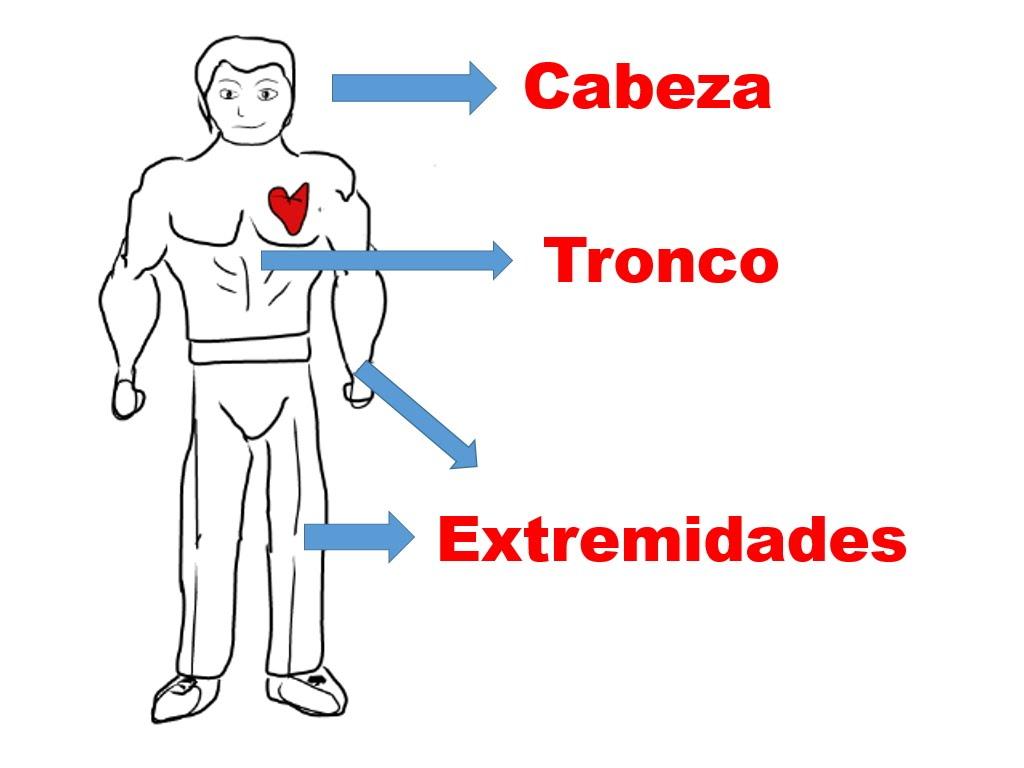 Perfecto Los Humanos Partes Del Cuerpo Adorno - Anatomía de Las ...