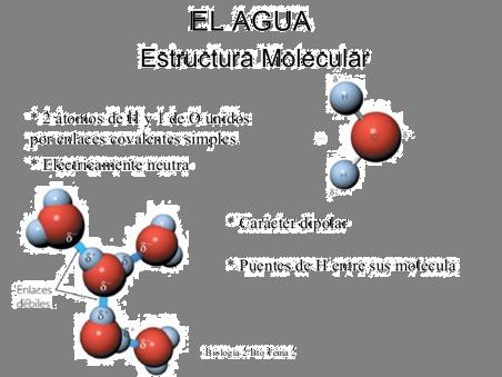 S6 Bqii Biologia I Act 02 Lectura De La Estructura Del Agua