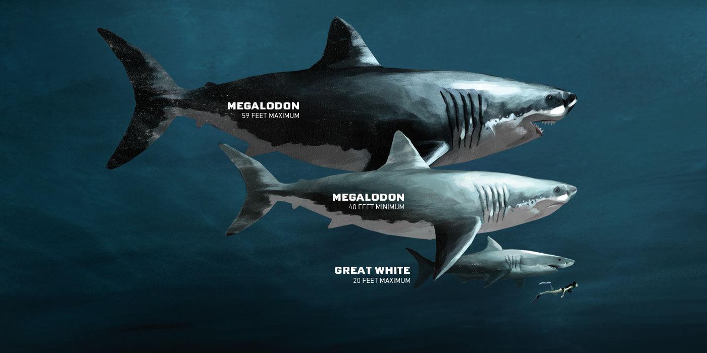 megalodon shark size - 1400×700