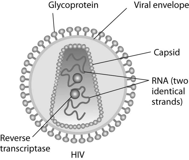 HIV AIDS on emaze