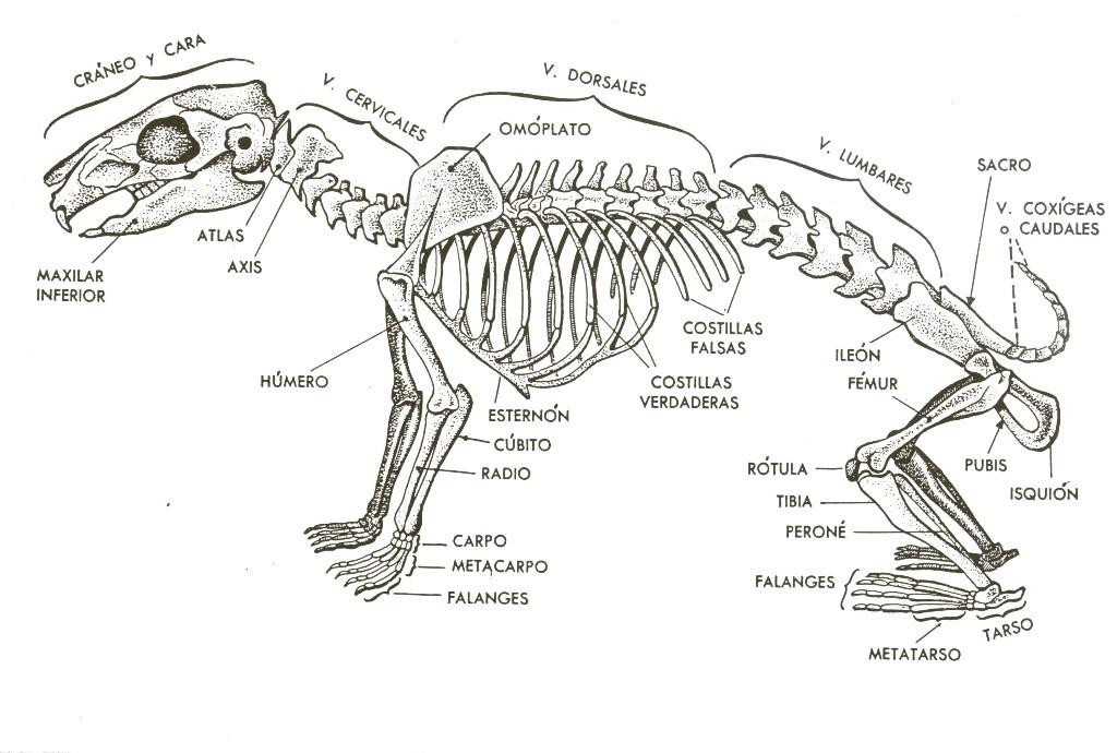 Excepcional Anatomía Conejo Fotos Galería - Imágenes de Anatomía ...
