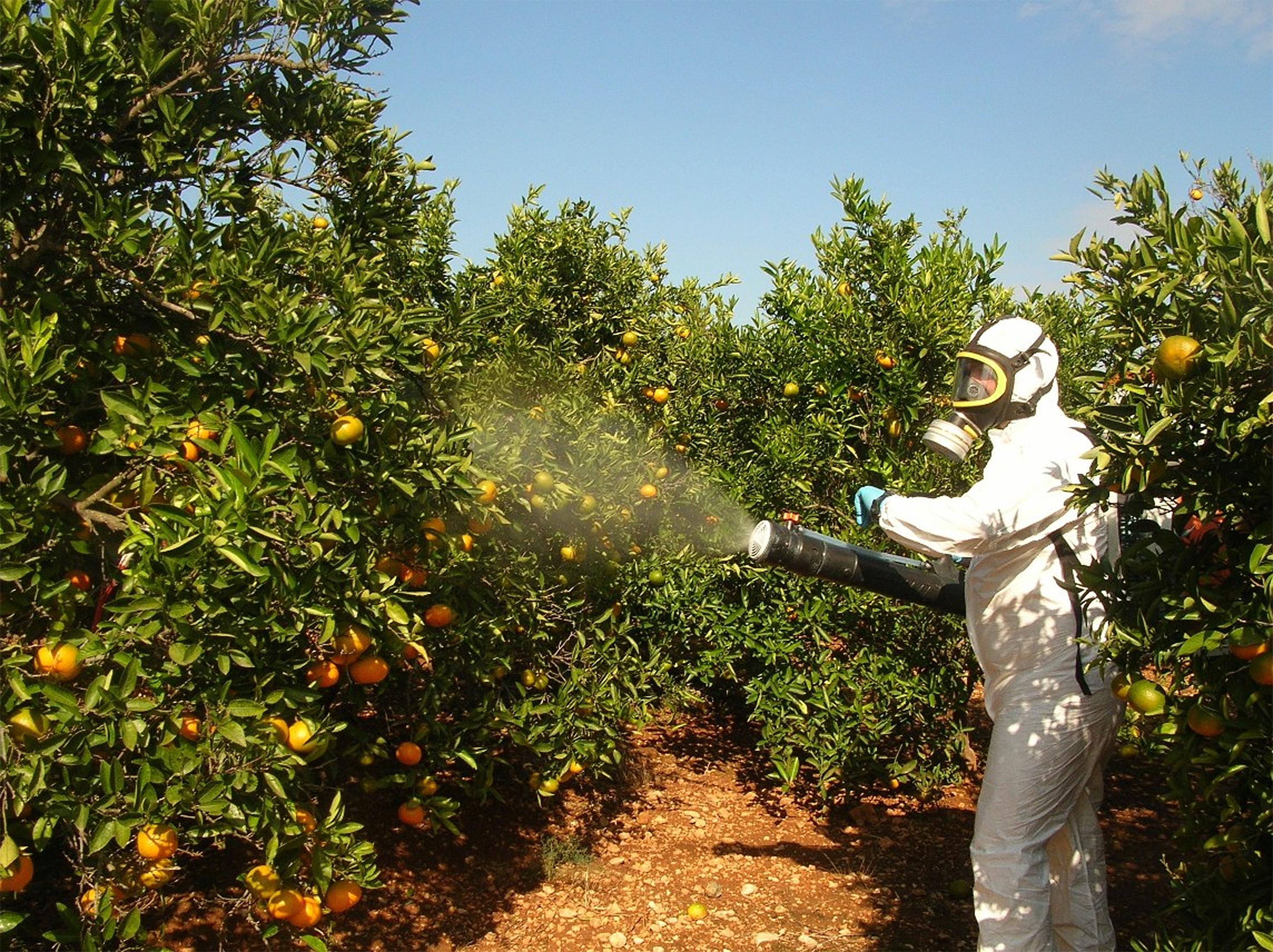 Fumigando con pesticidas la fruta
