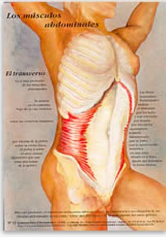 huesos y MÚSCULOS on emaze