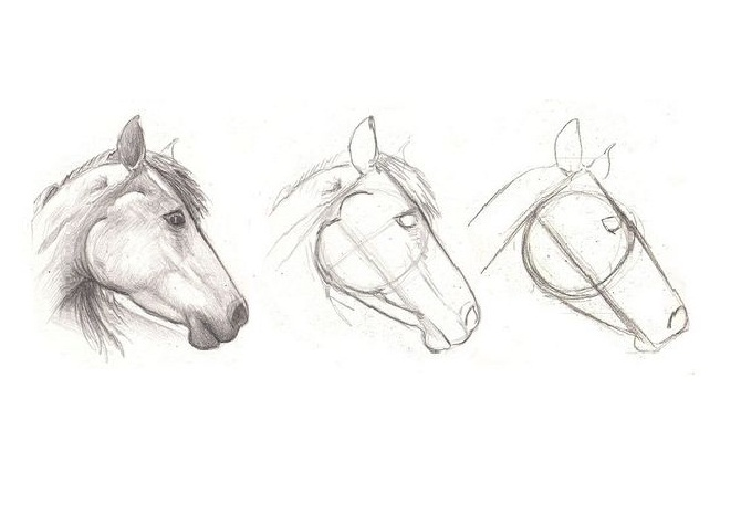Dibujos Profesionales De Caballos Pictures To Pin On