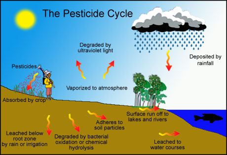 an analysis of the effects on the ecosystem by chemical pesticide ddt Studies on the distribution and flux of pesticides in waterways associated with a ricefield--marshland ecosystem  ddt/analysis decapoda  chemical/analysis.