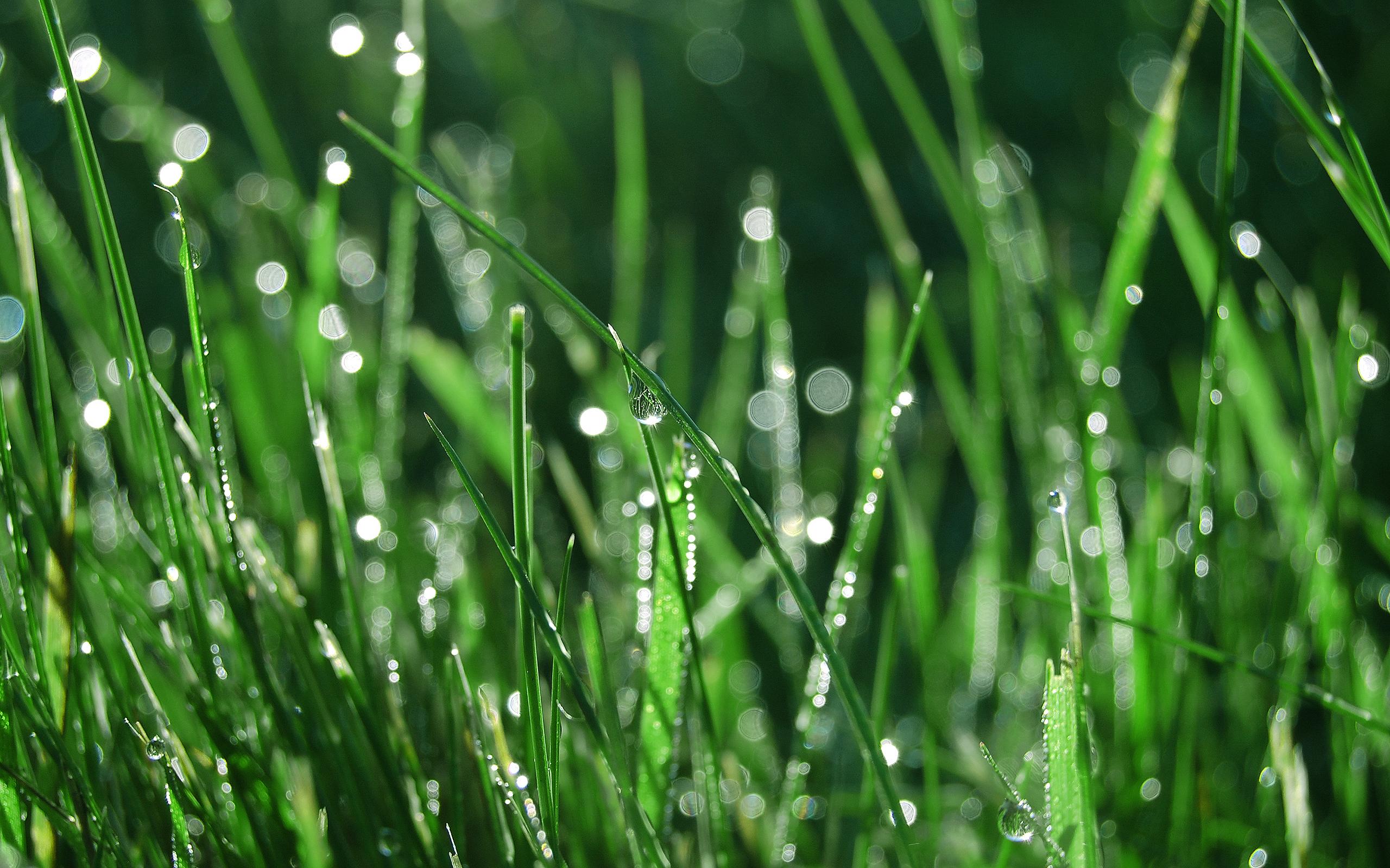 картинки трава с росинкой усадьбы очень