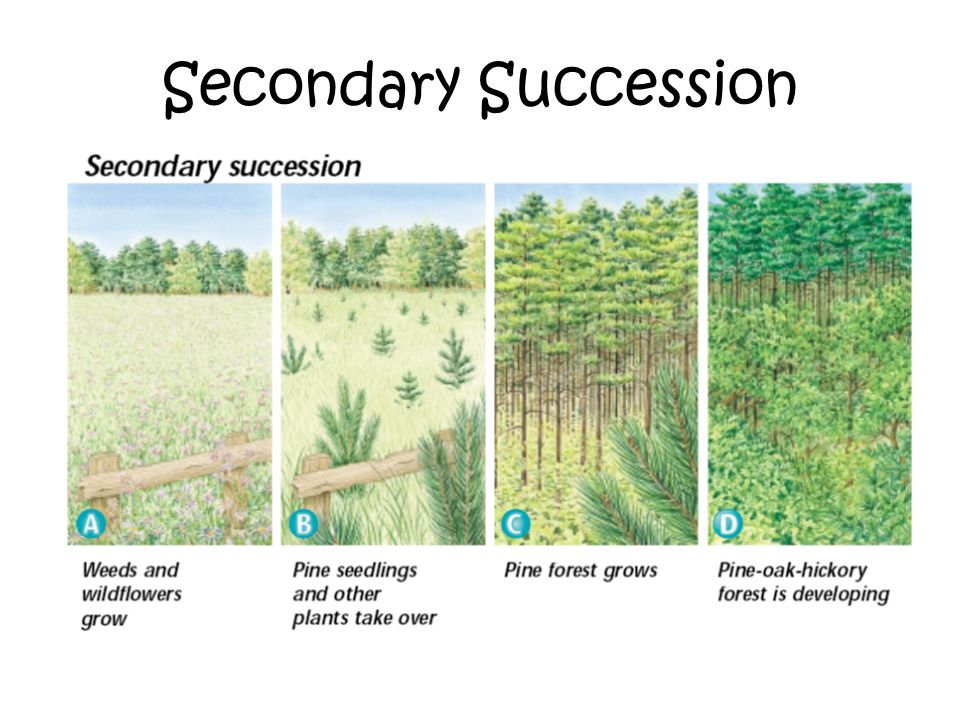 Primary and Secondary Succession on emaze
