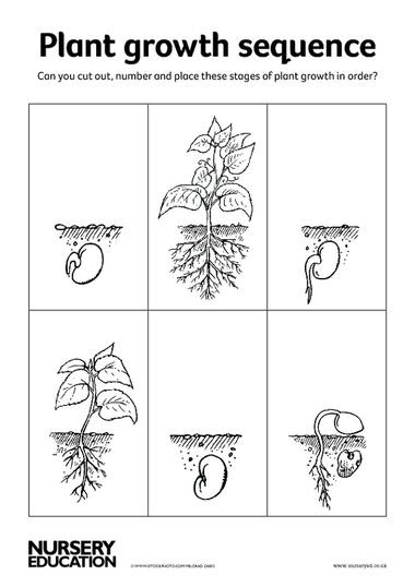 Collection of Plant Growth Worksheet - Bloggakuten