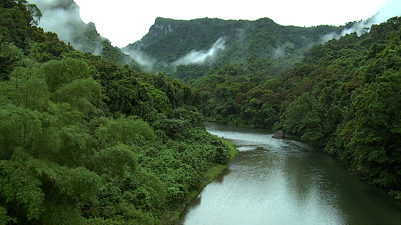 The Tropical Rainforest!!!! on emaze