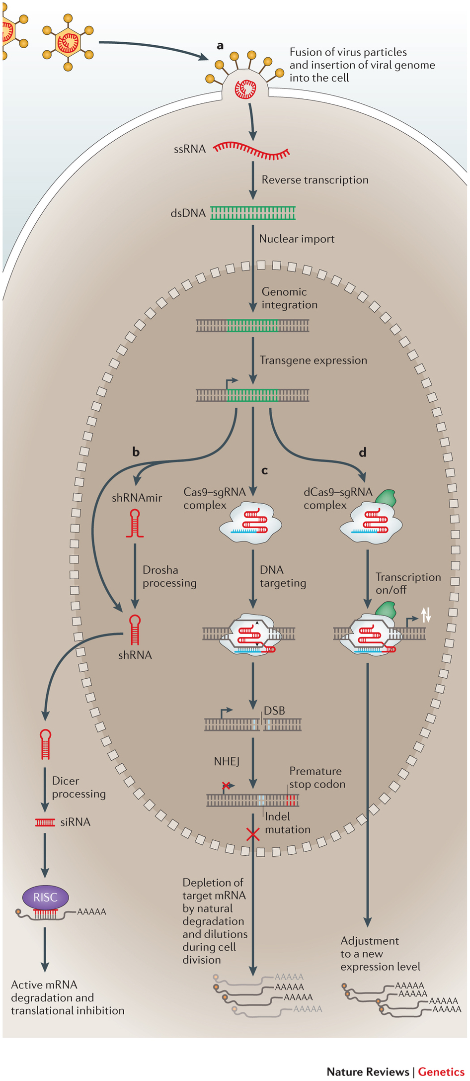 molecular factors underlying rate - HD946×2174