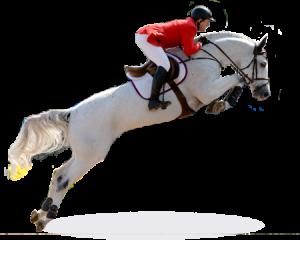 Resultado de imagen de Equitación