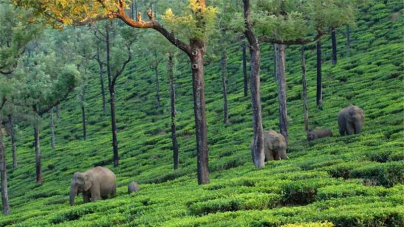 Asian Elephants on emaze