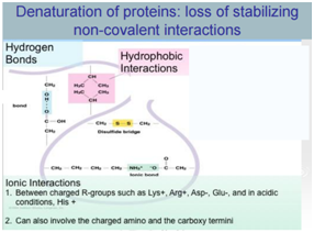 protein denaturalization denaturation