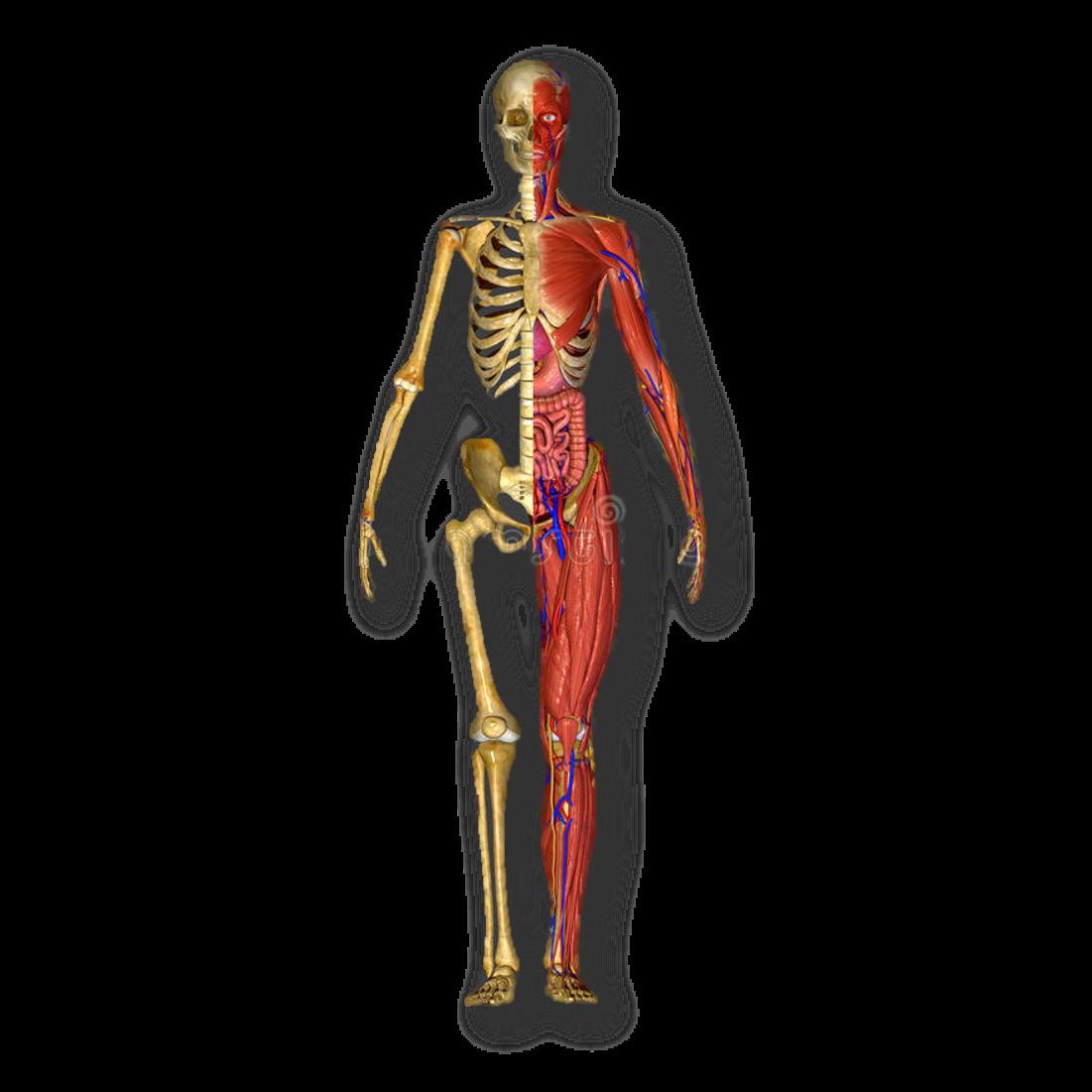anatomia on emaze