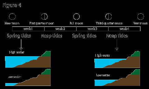 Spring Tide Diagram Best Spring 2018
