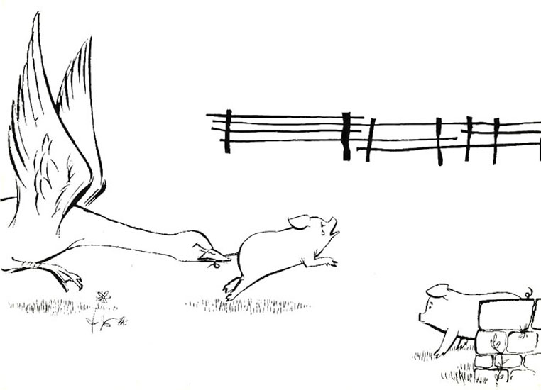 Anal cerdo 01 - 5 3