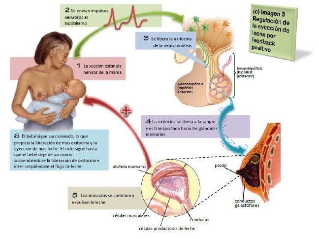 Bloque V - Portafolio de Biología II AMSC