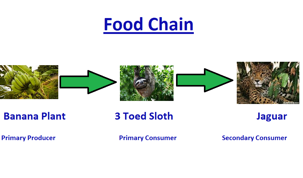food chains of the tropical rainforest - Khafre