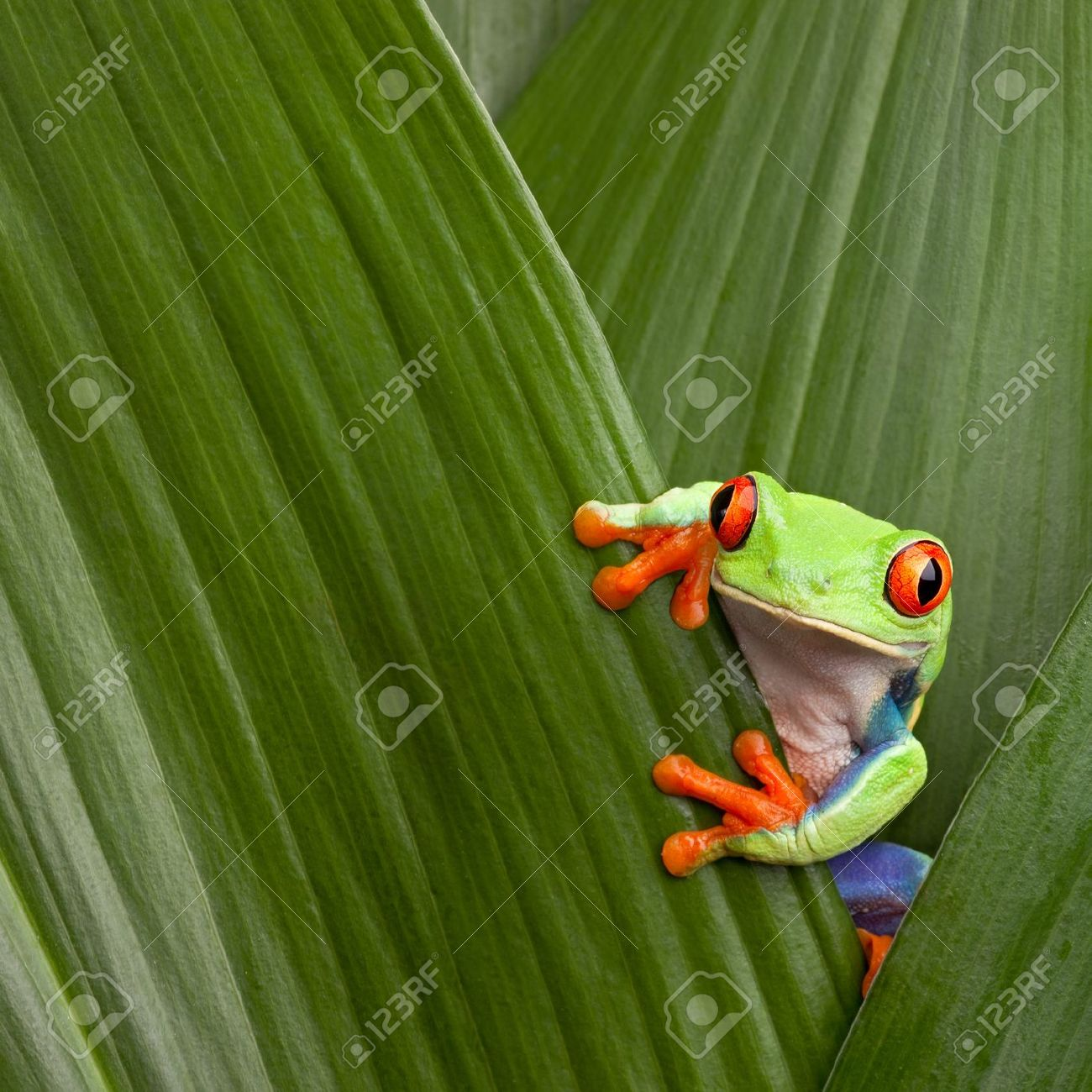 Life In The Rainforest By Arlette Renteria On Emaze