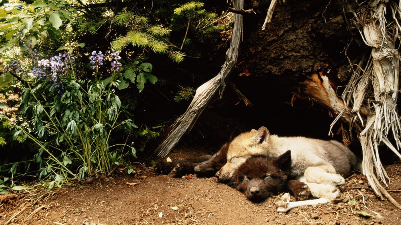 новый торговый картинки где спят волки расскажу
