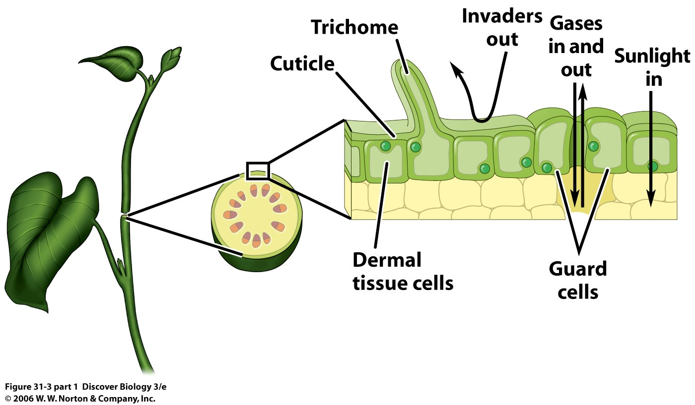 Plant structure and on emaze