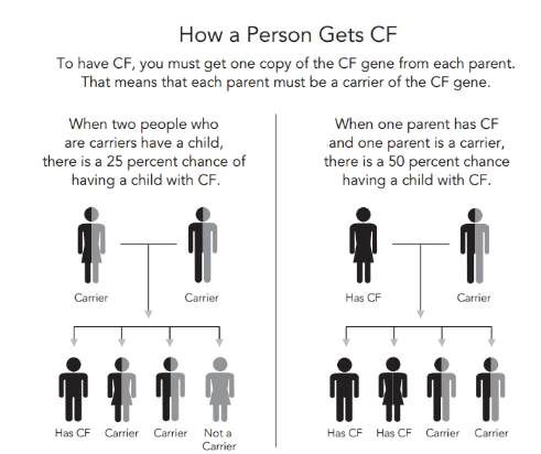 caucasian people as carries of one of the defective cystic fibrosis causing genes The positional cloning of the gene responsible for cystic fibrosis cf-causing gene of orthologous genes in other species one line of such.