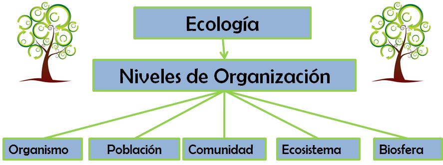 diagrama que explique la organizacion ecologica de los