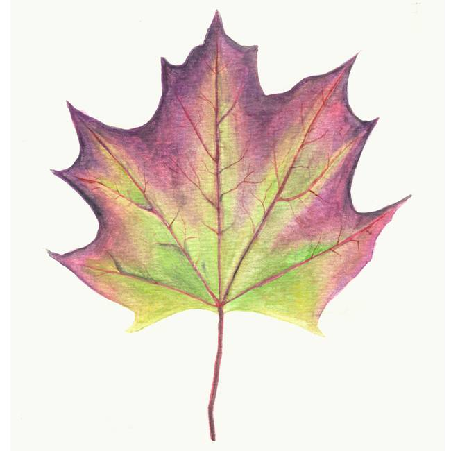 Image result for purple leaf