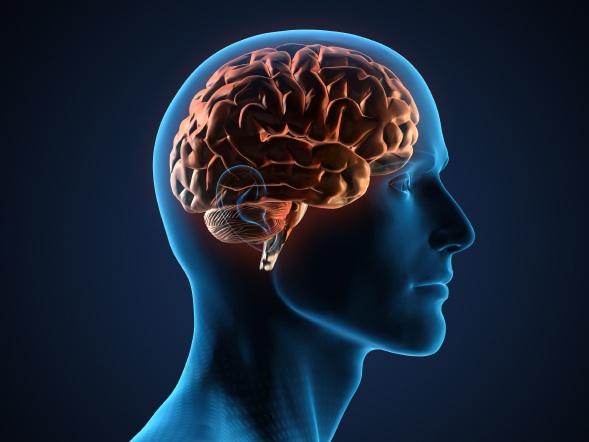 Ученые готовятся начать сенсационные опыты по воскрешению мозга