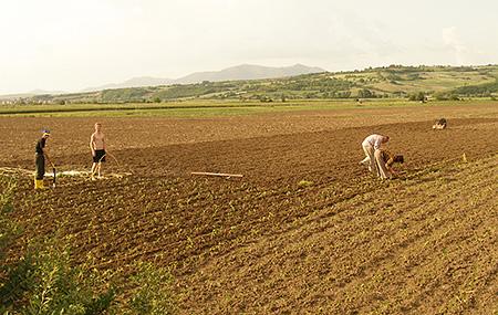 commercial arable farming
