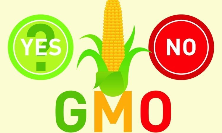 gene modified food is a bad Genetically modified organisms have not been proven to be safe to gmos are bad for your body  genetically engineered foods have not been proven to be.