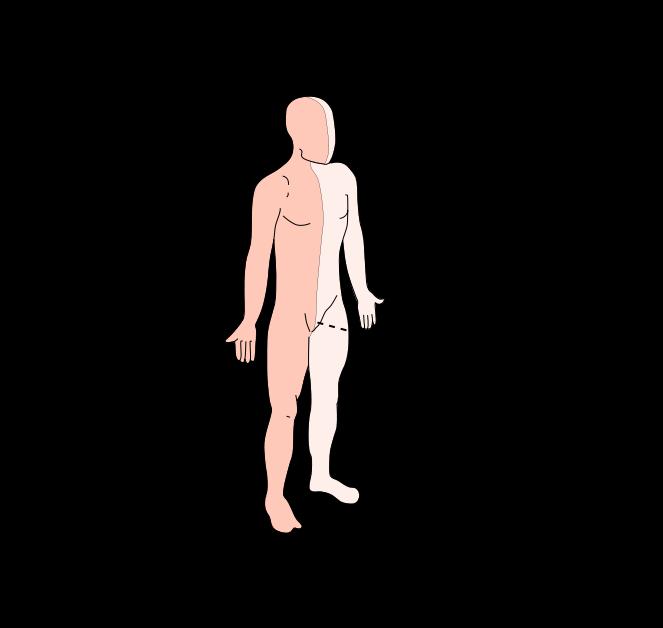 lenguaje anatómico on emaze